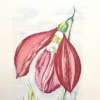 Red snowdrop on grass, painting by JoeKaArt